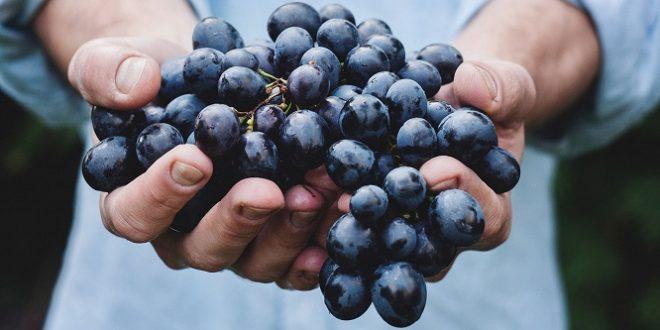 Coldiretti Vicenza: Festa dell'uva domenica a Bassano del Grappa