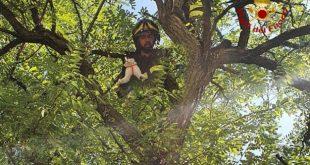 Micio recuperato sull'albero dai VVF